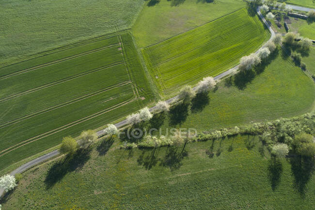 Aerial view of rural road with white blossoming trees and agricultural fields, Franconia, Bavaria, Germany — Stock Photo