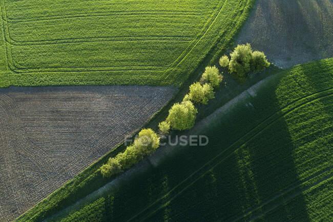 Vista aérea de árboles entre campos agrícolas con sombras, Franconia, Baviera, Alemania - foto de stock