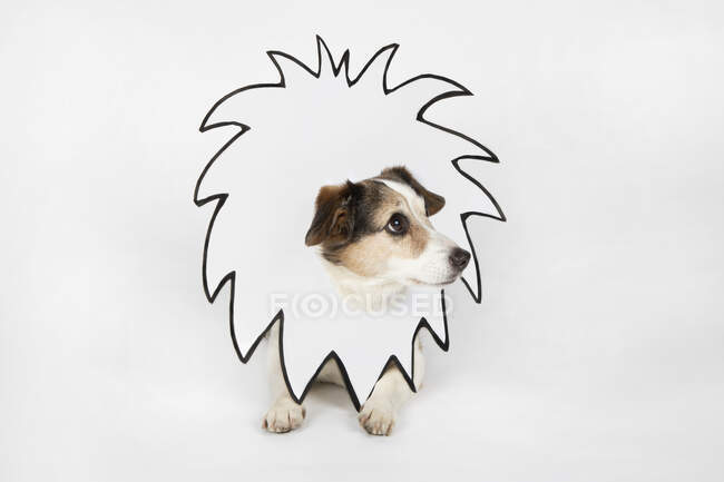Little dog with drawn lion's mane — Stock Photo