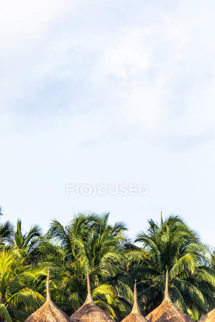 Palm trees, sunshades and sky with clouds at the beach, Holbox, Yucatan, Mexico — Stock Photo