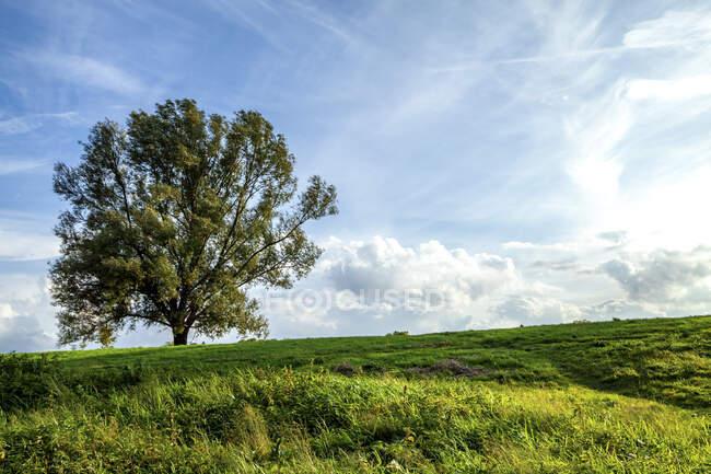 Single tree on a meadow, Odenwald, Hesse, Germany — Stock Photo