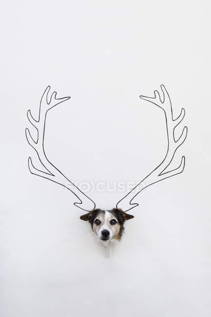 Retrato de mestizo con asta de ciervo dibujada en suelo blanco - foto de stock