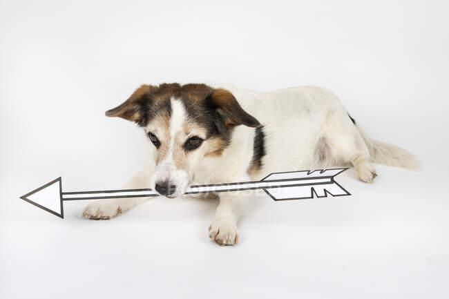 Retrato de mestizo con flecha dibujada yaciendo en suelo blanco - foto de stock