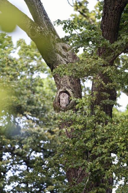 Тай-брейк в яме на дереве, Германия — стоковое фото