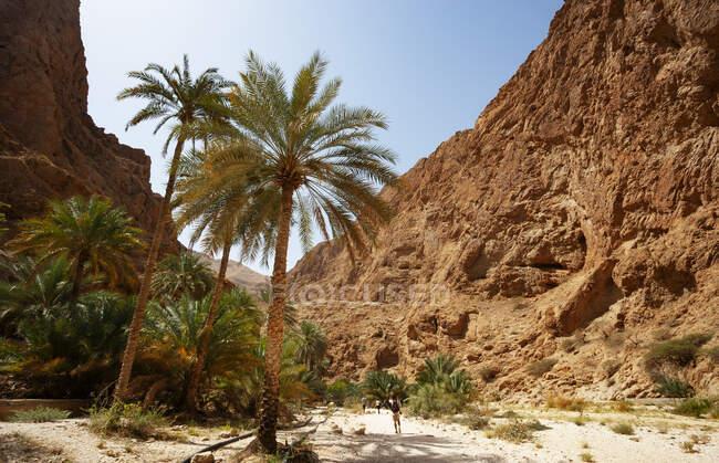 Caminante, Wadi Shab, Omán - foto de stock