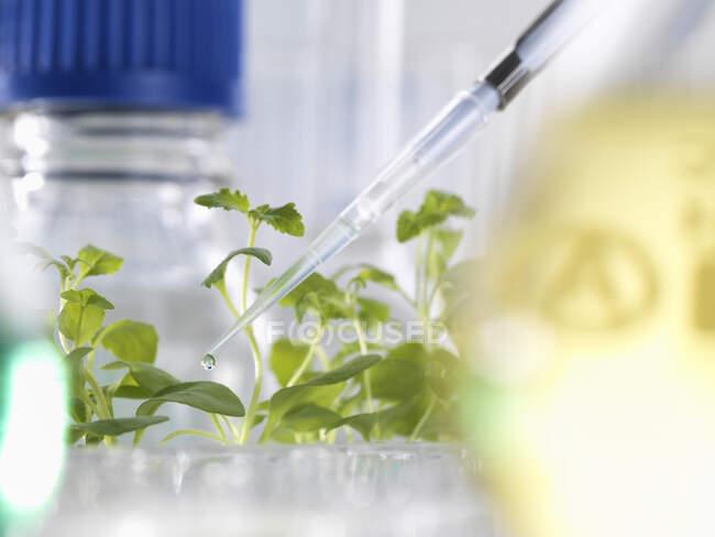 Experimento científico con plantas durante un ensayo agrícola en un laboratorio. - foto de stock