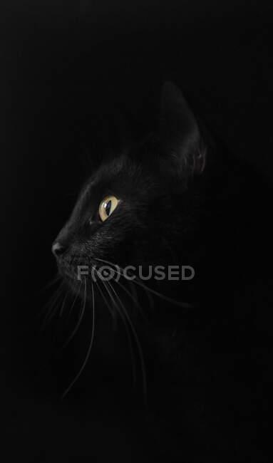 Profile of black cat against black background — Stock Photo