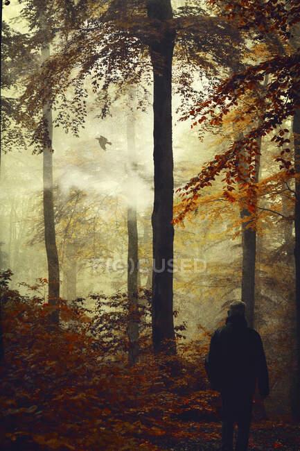 Vista posteriore dell'uomo nella foresta autunnale — Foto stock