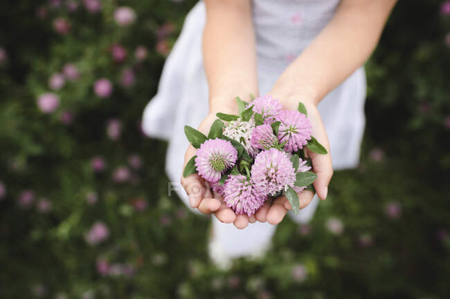 Girl's hands with clover flowers — Stock Photo