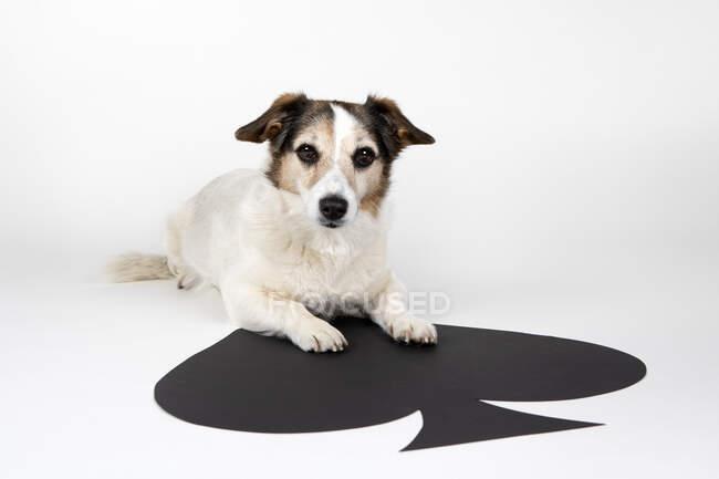 Retrato de mestizo acostado sobre un gran as de picas - foto de stock