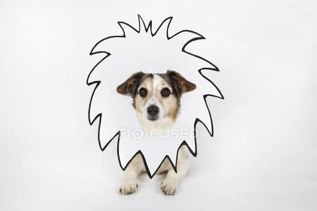 Portrait of mongrel with drawn lion's mane in front of white background — Stock Photo