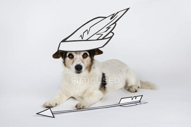 Portrait of mongrel as Sagittarius with drawn feather hat and arrow lying on white ground — Stock Photo