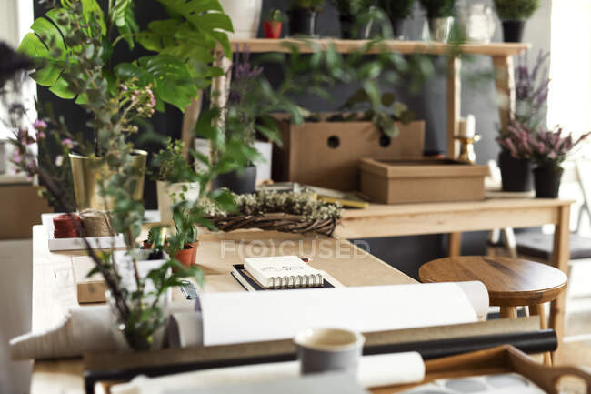 Potted plants and accessories on table — Stock Photo