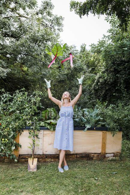 Блондинка, собирающая мангольд с раскладушки в своем саду — стоковое фото