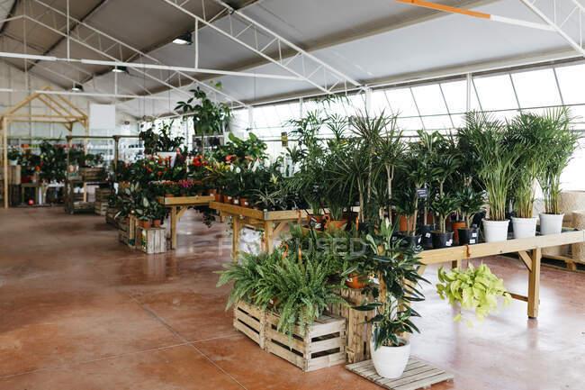 Assortment of plants in a garden center — Stock Photo