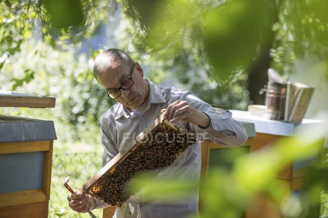 Охоронець медового стільника з медоносними бджолами. — стокове фото