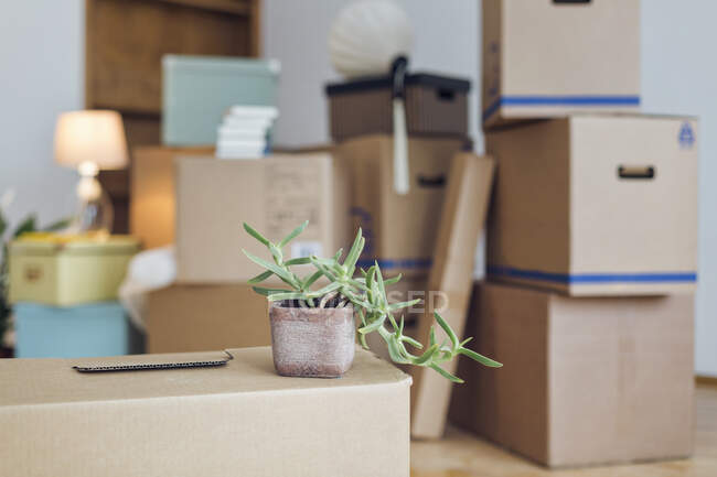 Potted plant on cardboard box in an empty room in a new home — Stock Photo