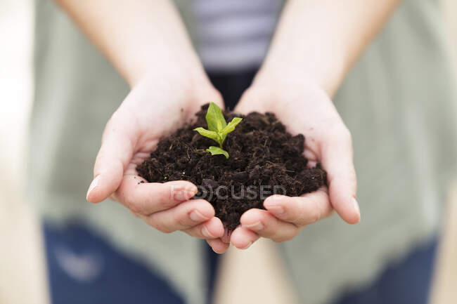 Close-up of woman's hands holding a young plant — Stock Photo