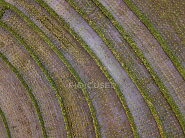 Aerial view of rice terraced field, Bali, Indonesia — Stock Photo