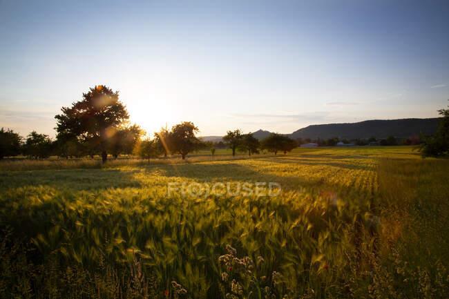 Закат в полях города штата Грузия — стоковое фото