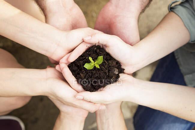Руки друзів, які тримають молоду рослину. — стокове фото