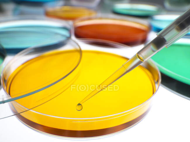Primo piano dei campioni che pipettano in capsule di Petri contenenti gelatine di agar in laboratorio — Foto stock