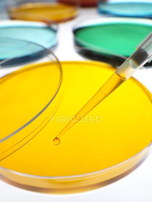 Primo piano dei campioni di pipettatura in capsule di Petri contenenti gelatine colorate di agar in laboratorio — Foto stock