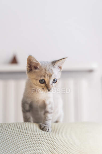Close-up of cute kitten standing on sofa against wall at home — Stock Photo