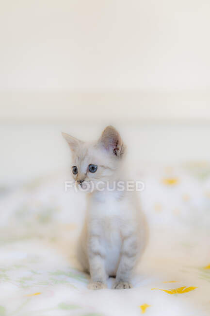 Close-up of cute kitten looking away while sitting on bed at home — Stock Photo