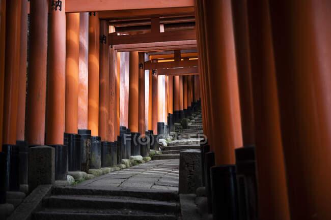 Japan, Kyoto Prefecture, Kyoto City, Torii path of Fushimi Inari-taisha temple — Stock Photo