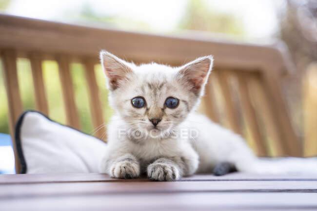 Primer plano retrato de lindo gatito sentado en la mesa - foto de stock