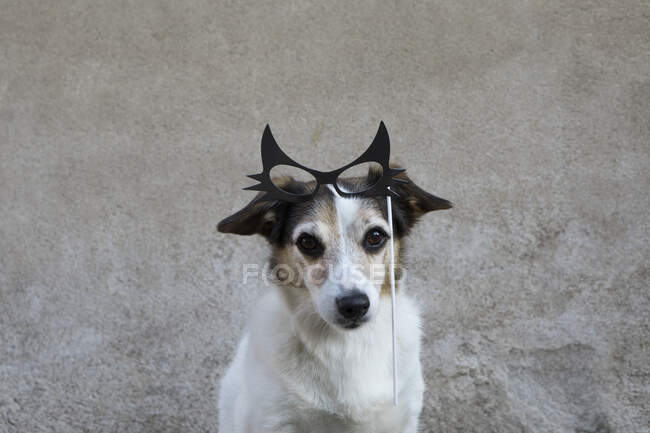 Portrait of mongrel with comedy glasses — Stock Photo