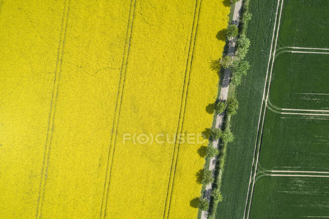 Germany, Mecklenburg-Western Pomerania, Aerial view of treelined dirt road through rapeseed and wheat fields in spring — Stock Photo