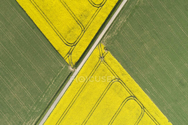 Germany, Bavaria, Aerial view of dirt road between rapeseed and wheat fields in spring — Stock Photo