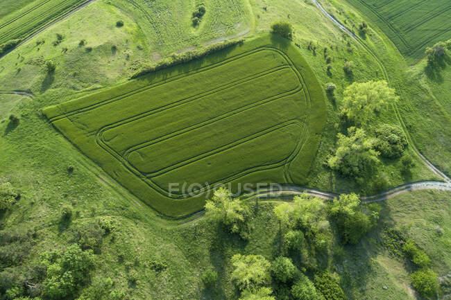 Alemania, Baviera, Vista aérea del campo verde en primavera - foto de stock