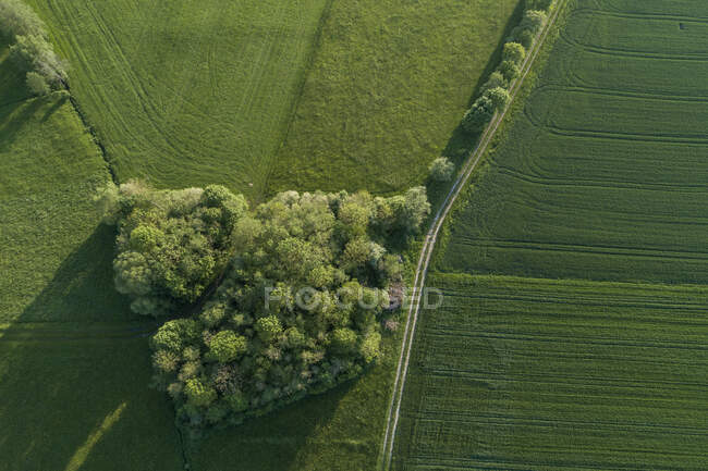 Germany, Bavaria, Aerial view of country road stretching between small grove and green countryside fields — Stock Photo