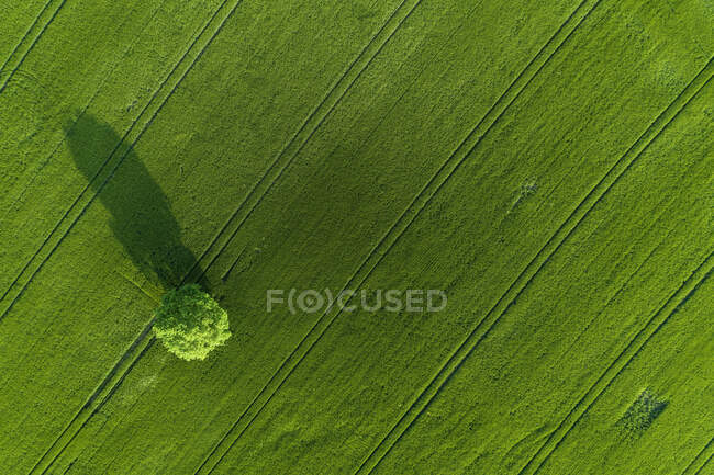 Germany, Thuringia, Aerial view of lone tree growing in green countryside field — Stock Photo