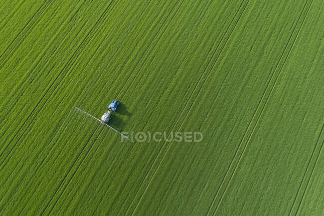 Germany- Mecklenburg-WesternPomerania- Aerial view of lone tree growing in vast wheat field in spring — Stock Photo