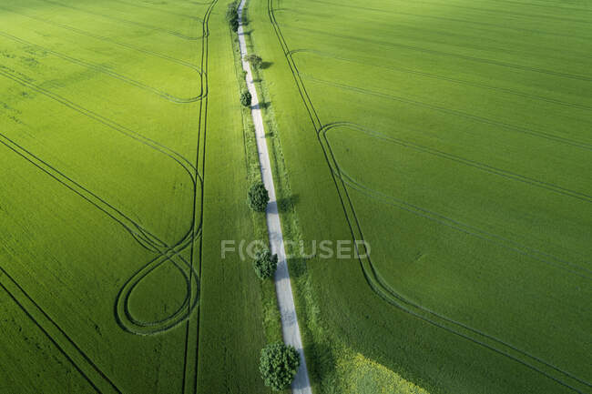 Germany, Thuringia, Aerial view of treelined road stretching between vast countryside fields — Stock Photo