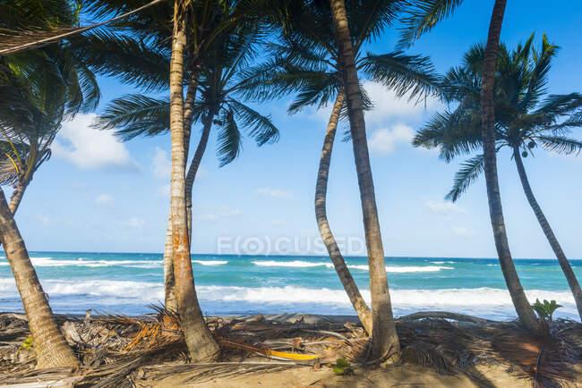 Palme che crescono in spiaggia contro il cielo blu in Sauteurs, Grenada, Caraibi — Foto stock