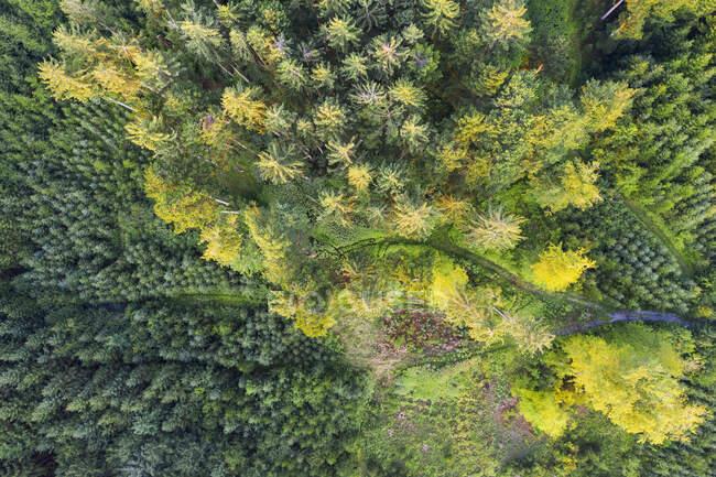 Vista aérea da floresta com reflorestamento perto de Dietramszell, Tlzer Land, Alta Baviera, Baviera, Alemanha — Fotografia de Stock
