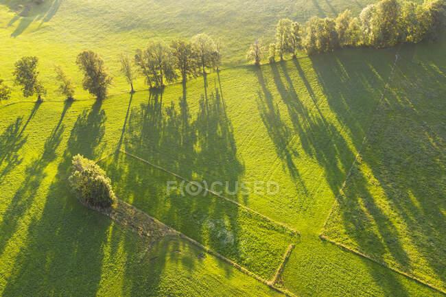 Vista aérea de árvores com longas sombras no prado em Wackersberg, Isarwinkel, Alta Baviera, Baviera, Alemanha — Fotografia de Stock