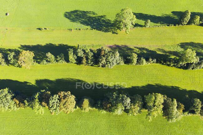 Vista da paisagem de sebe de monumento natural em Gaissach, Lenggries, Isarwinkel, Alta Baviera, Baviera, Alemanha — Fotografia de Stock