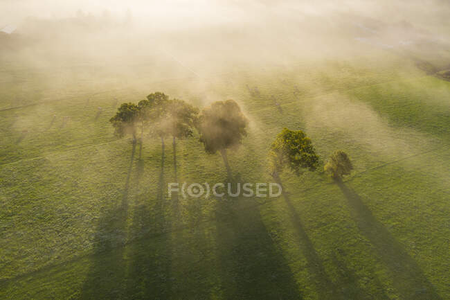 Germany, Upper Bavaria, Greiling, Aerial view of field and trees in fog at sunrise — Stock Photo