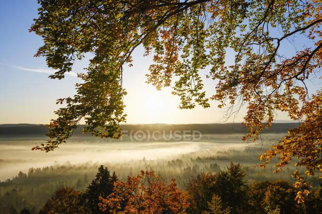 Germania, Baviera, Icking, rami di faggio contro il sole nascente che illumina la foresta nebbiosa in autunno — Foto stock