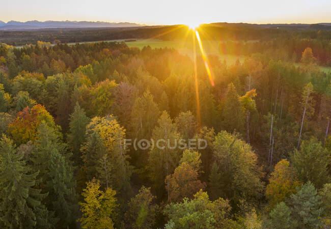 Alemanha, Baviera, Alta Baviera, Toelzer Land, Konigsdorf, Vista aérea da floresta de outono ao pôr do sol — Fotografia de Stock