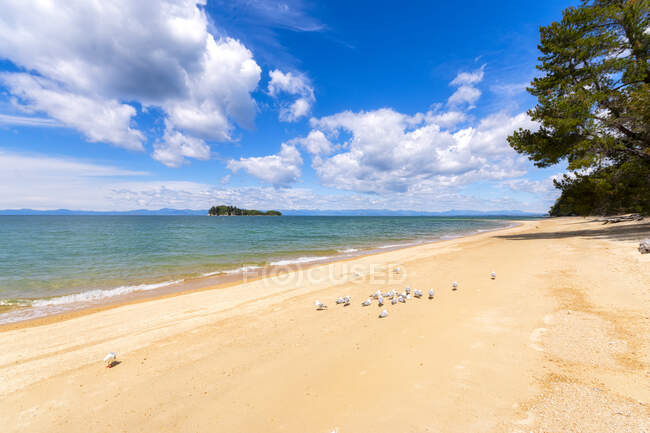 Birds perching on sea shore during sunny day at Abel Tasman Coastal Track, South Island, New Zealand — Stock Photo