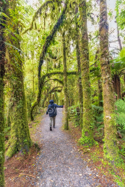 Female hiker touching tree, Roaring Billy Falls Walk, South Island, New Zealand — Stock Photo