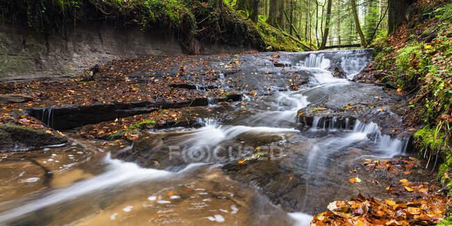Alemania, Baden-Wurttemberg, arroyo claro que fluye en el bosque de Suabia-Franconia - foto de stock