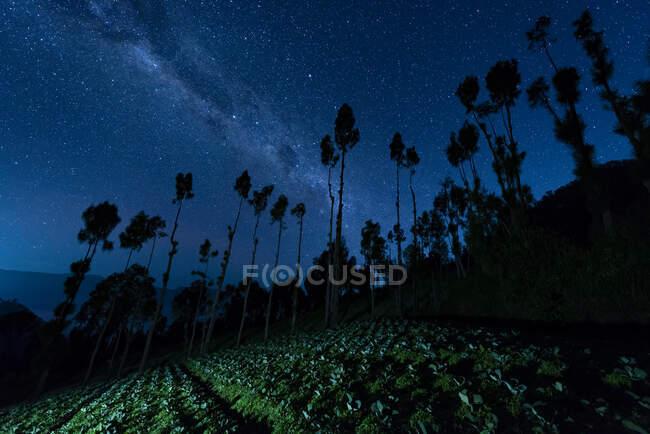 Індонезія, Східна Ява, силуети дерев, що стоять навпроти галактики Чумацький Шлях на зоряному нічному небі. — стокове фото